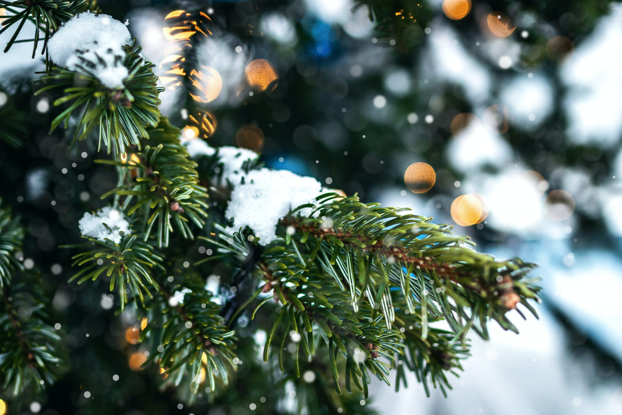 Gratitude in the Midst of the Holiday Season